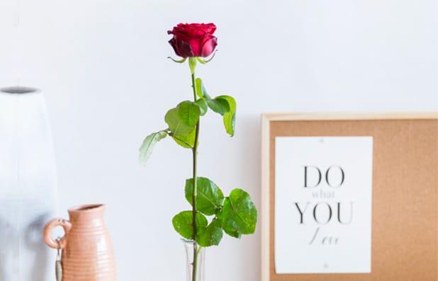 een-rode-roos