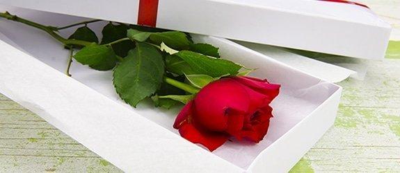 Roos door de brievenbus. Lief cadeautje via de post
