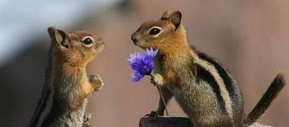 Wat lief, dieren die hun liefde tonen