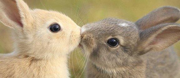 13 dierlijke lovebirds die je hart laten smelten