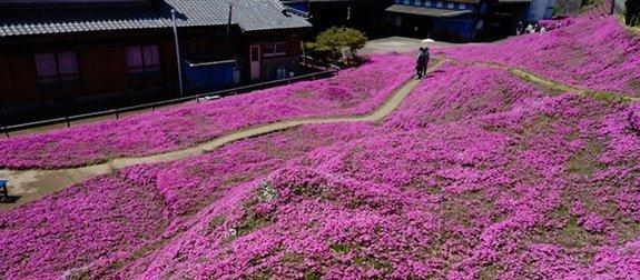 Man plant duizend bloemen voor zijn blinde vrouw