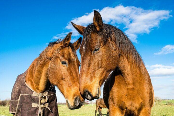 horses-1078676_960_720