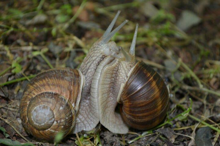 snail-937104_960_720